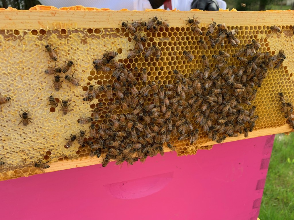 Closer look at honey