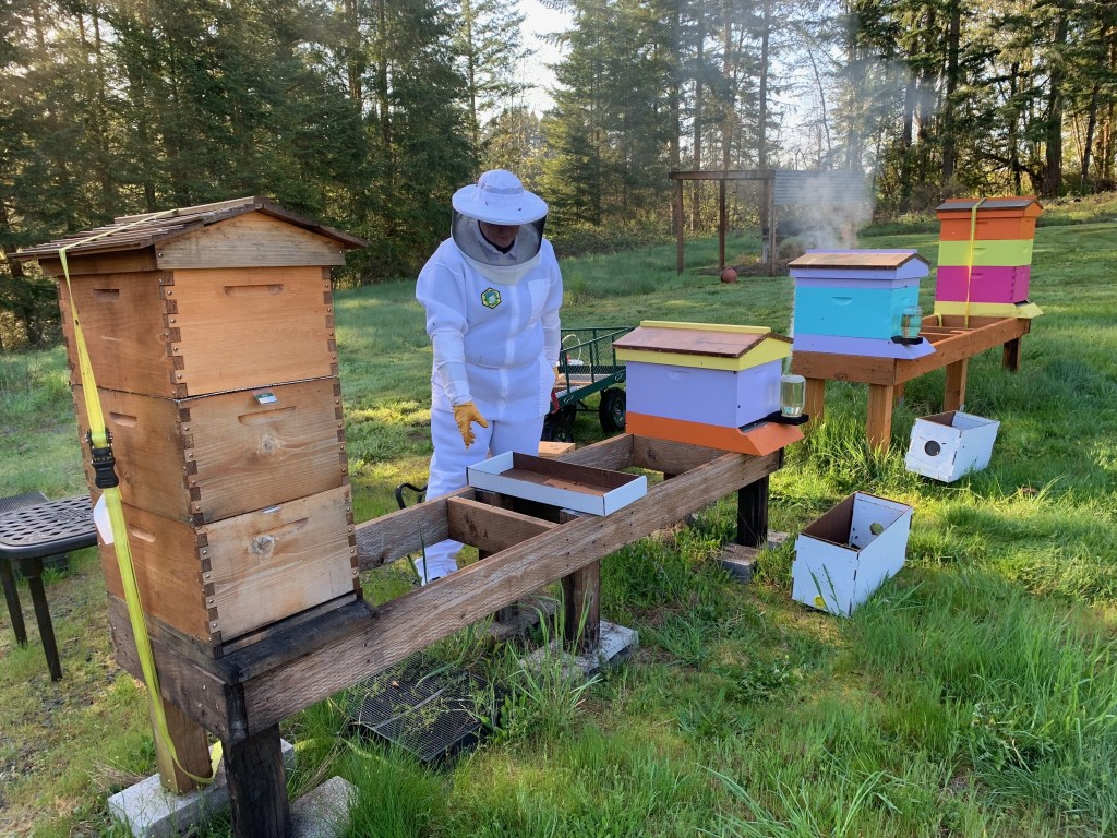Four hives