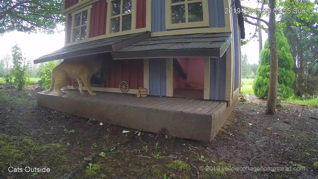 Orange cat facing cat inside