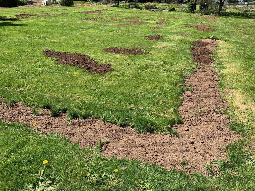 Dirt on lawn
