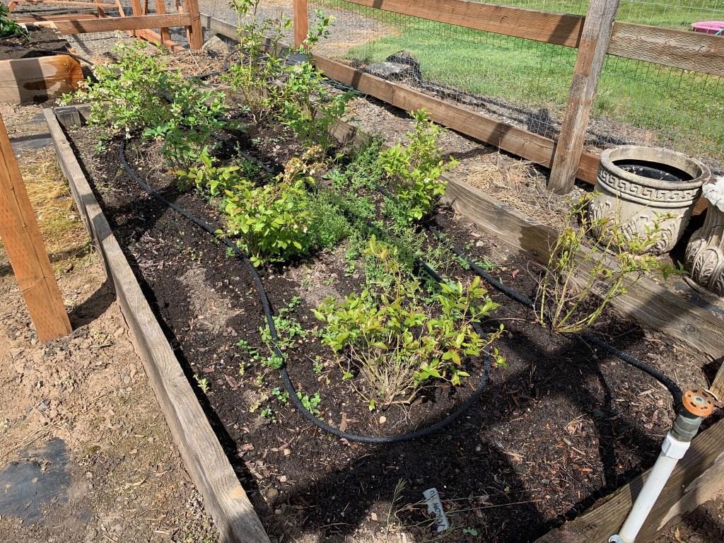 Veggie bed