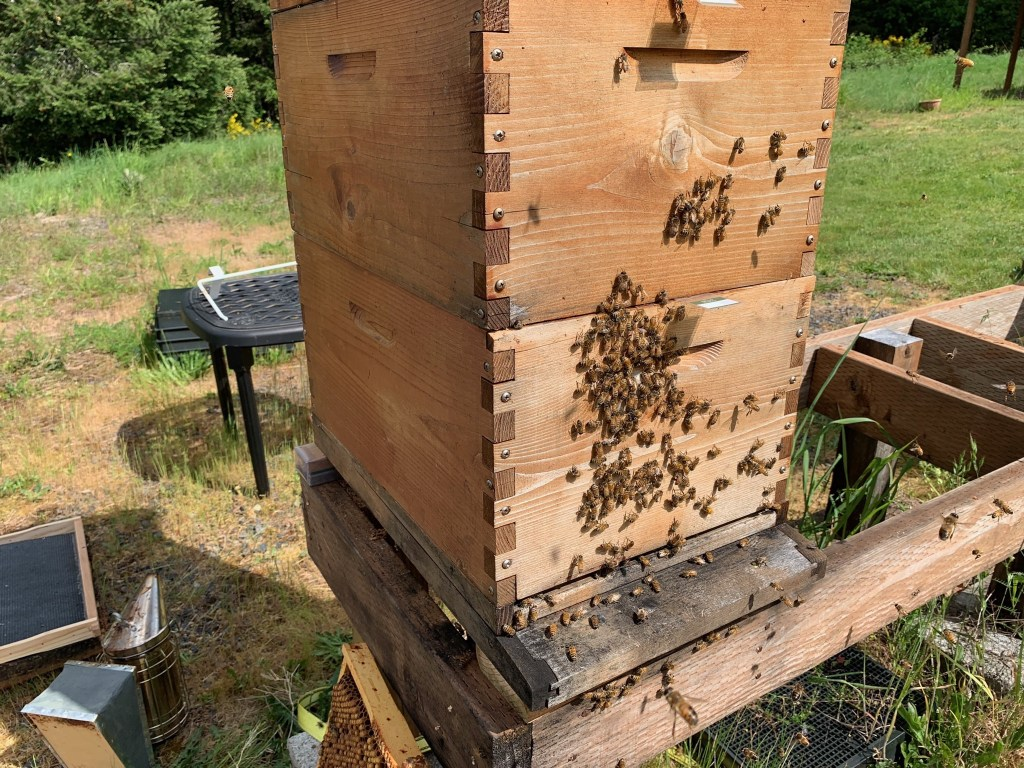 Bees outside box