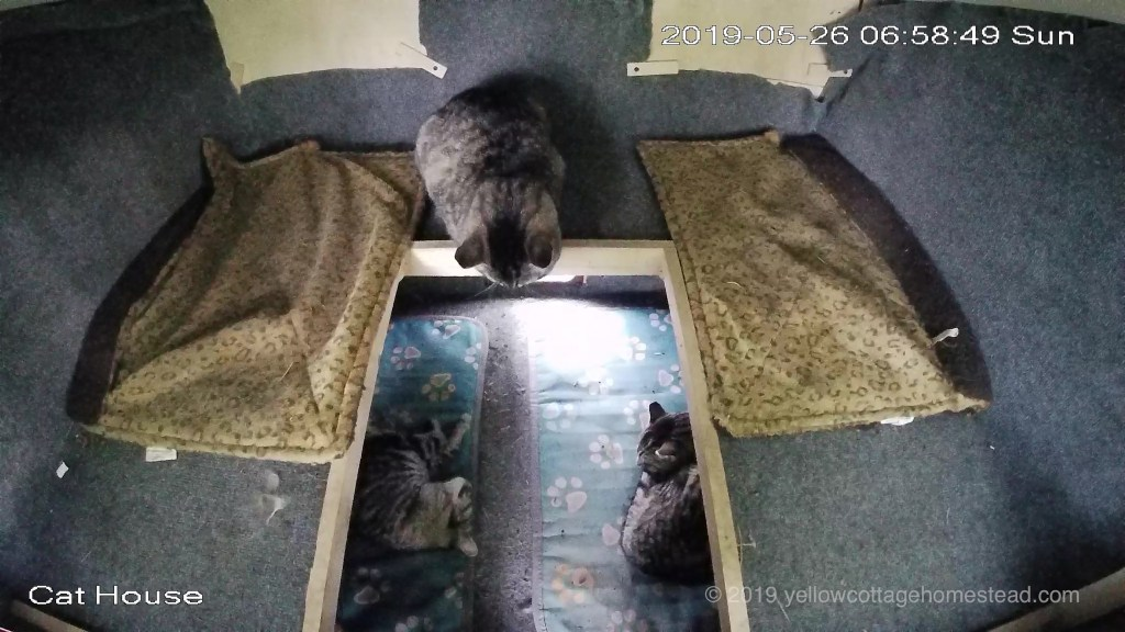Three cats inside