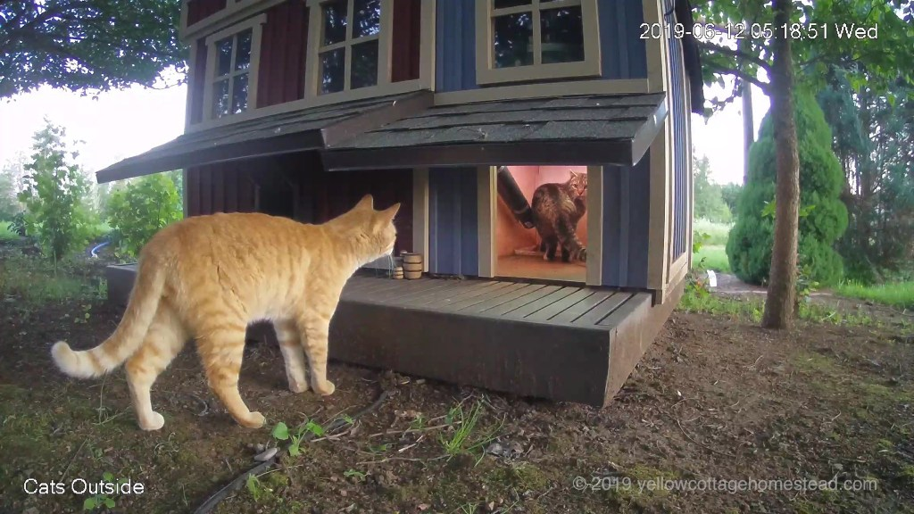 Orange cat & Poppy encounter
