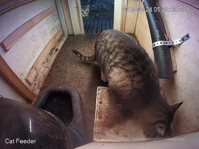 Orange cat peeking into the feeder