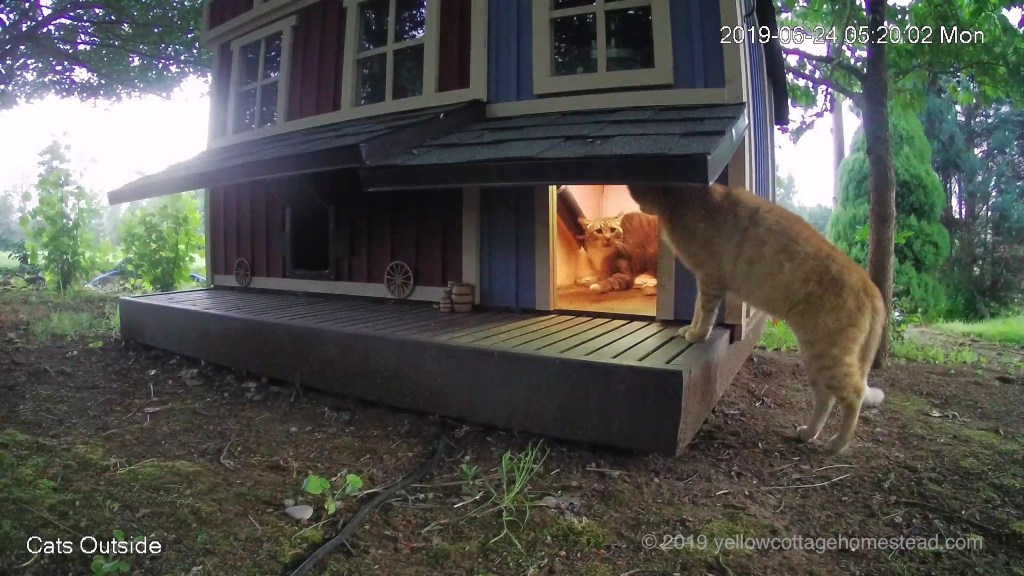 Orange cat peeking into feeder