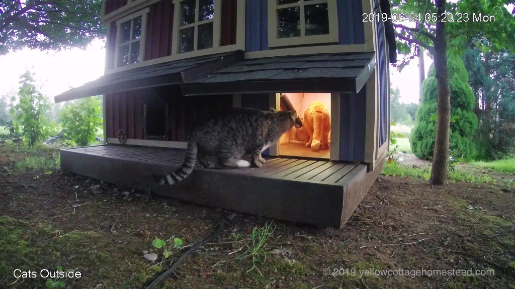 Orange cat in feeder