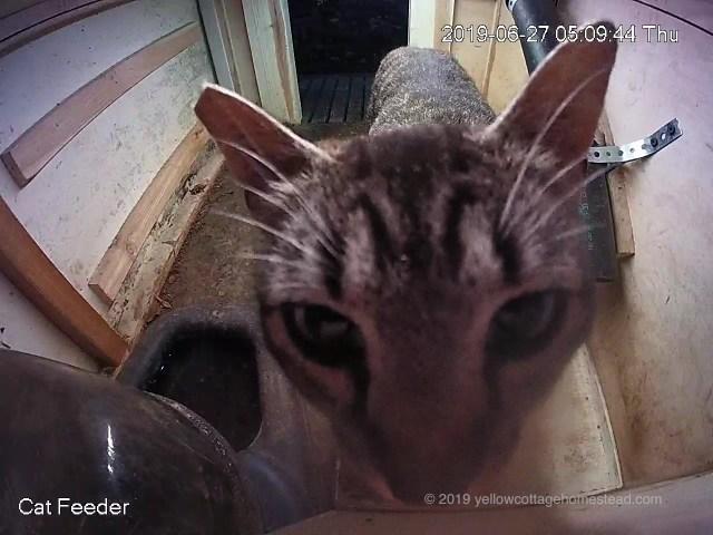 Cat in feeder