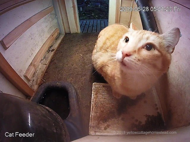 Orange cat in feeder