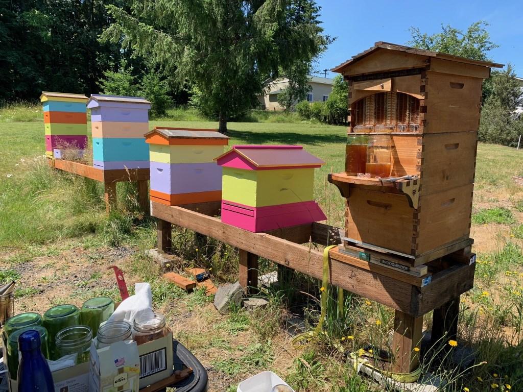 Five hives