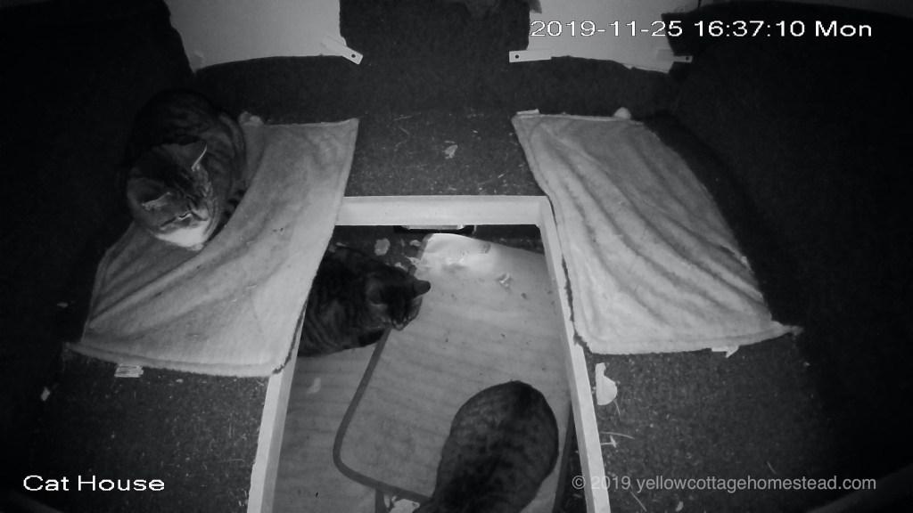Three cats inside