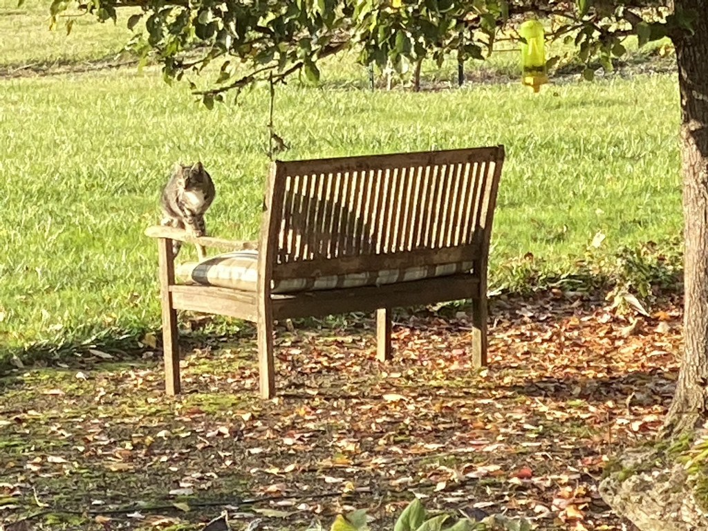 Cats on bench