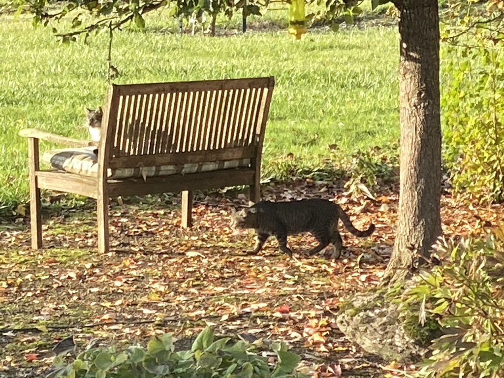 Cats by bench