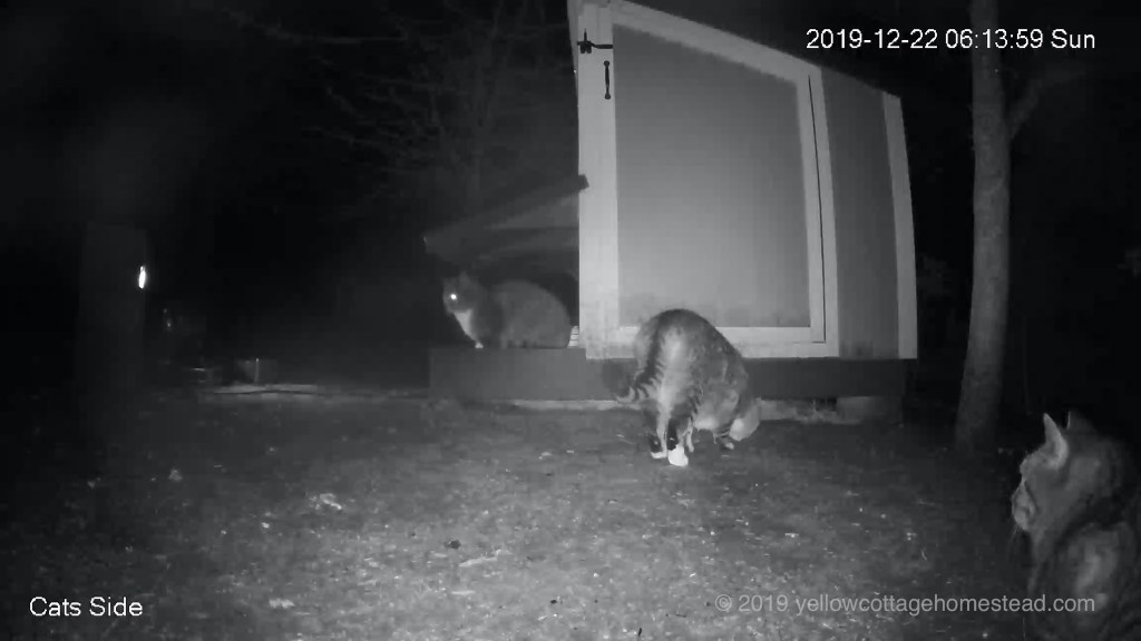 Cats from side cam