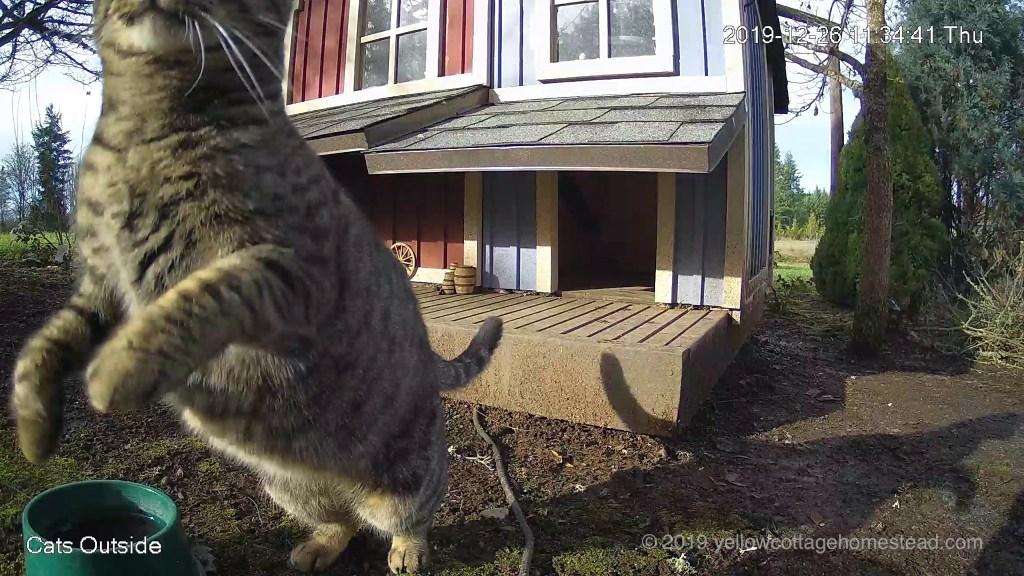 Jumping onto camera housing