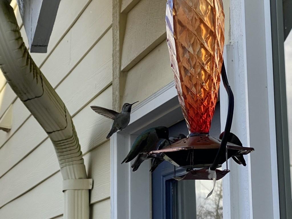 Standing next to hummingbird feeder