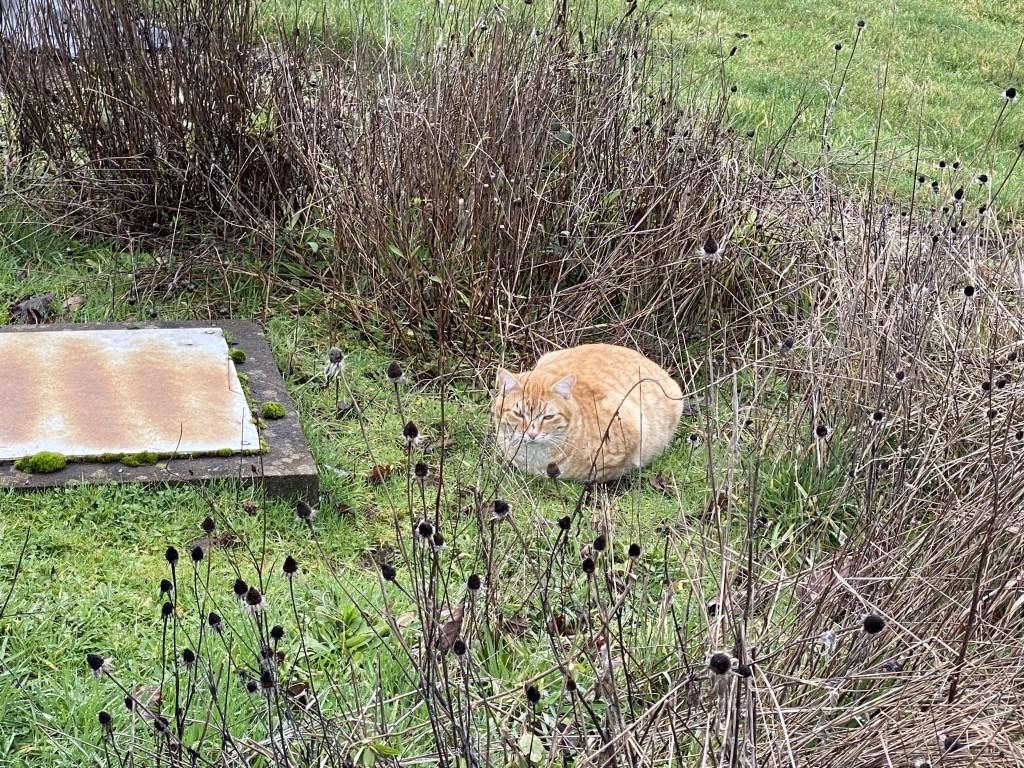 Pumpkin near the bird feeders