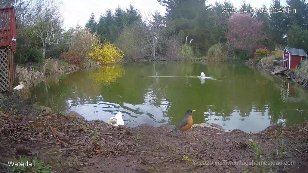 Ducks and bird