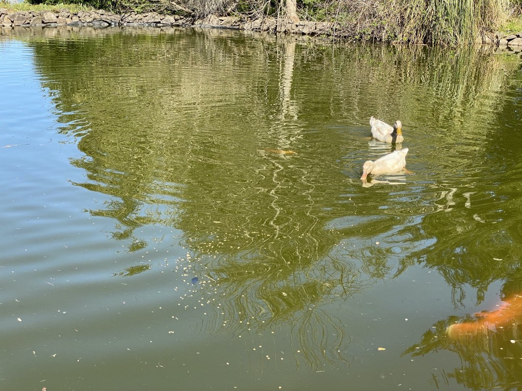 Fish and ducks