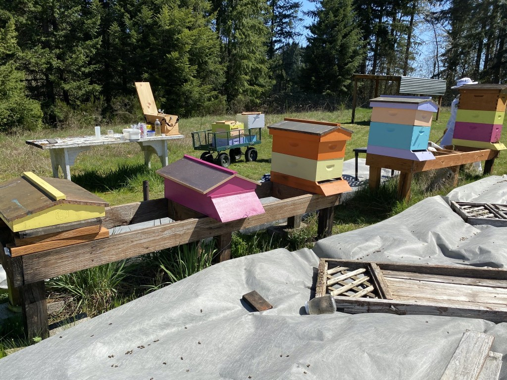 Two empty hives