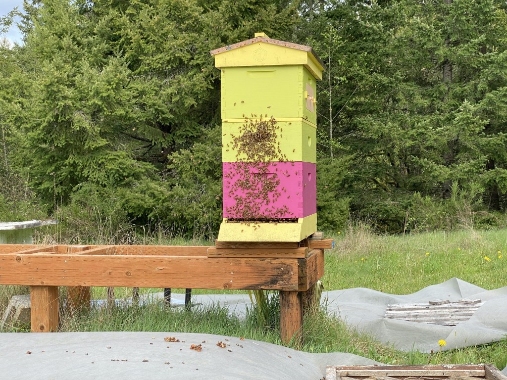 Bees on outside of hive