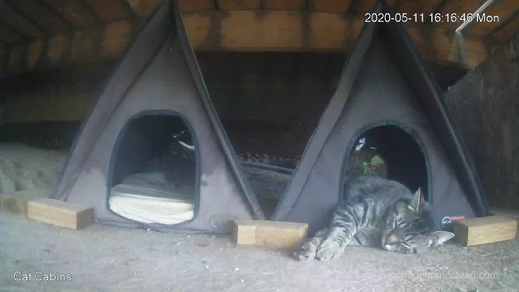 Cat in cabin