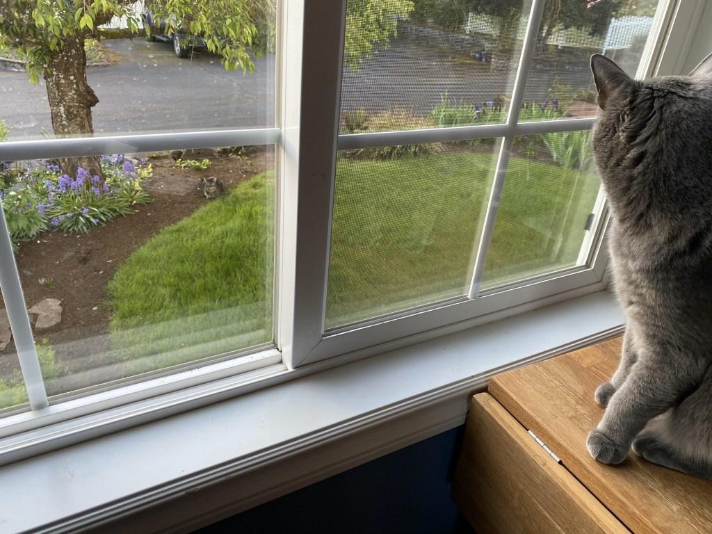 Paladin watching cat outside