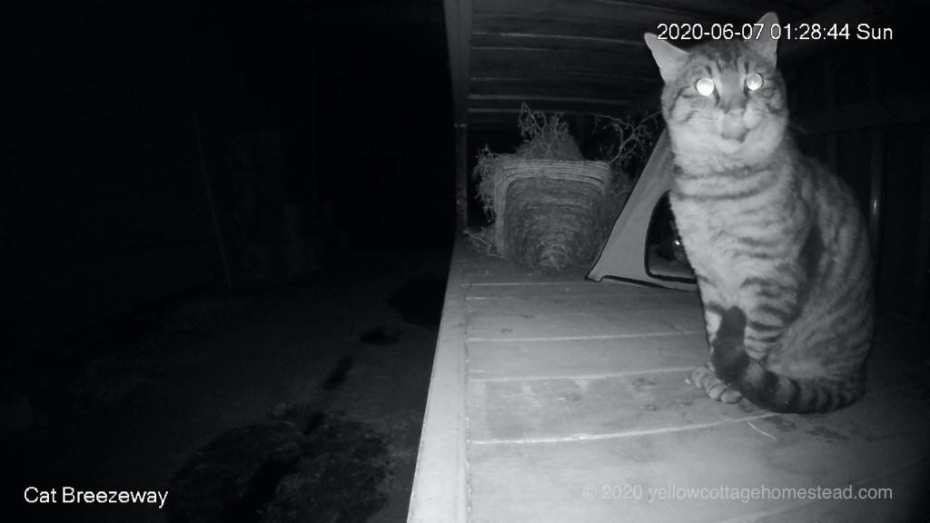 Breezeway cats