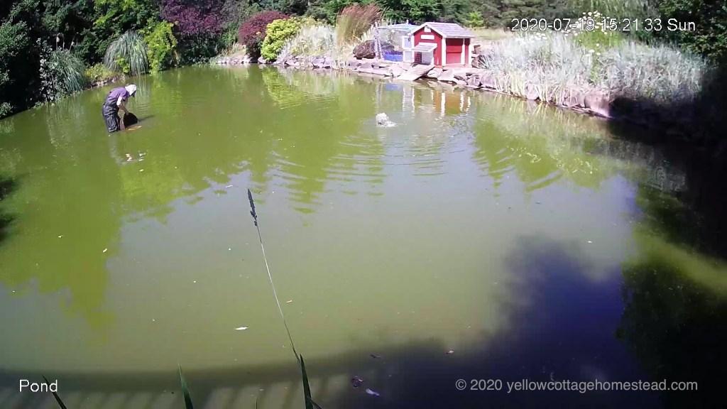 David in pond