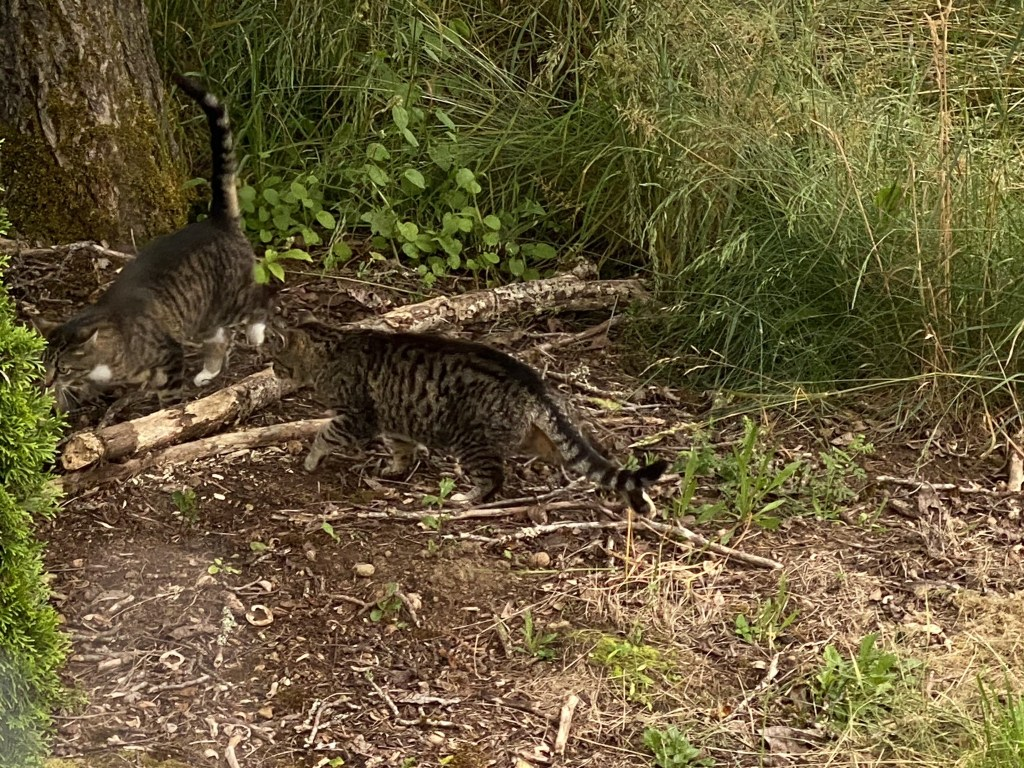 Cats in field