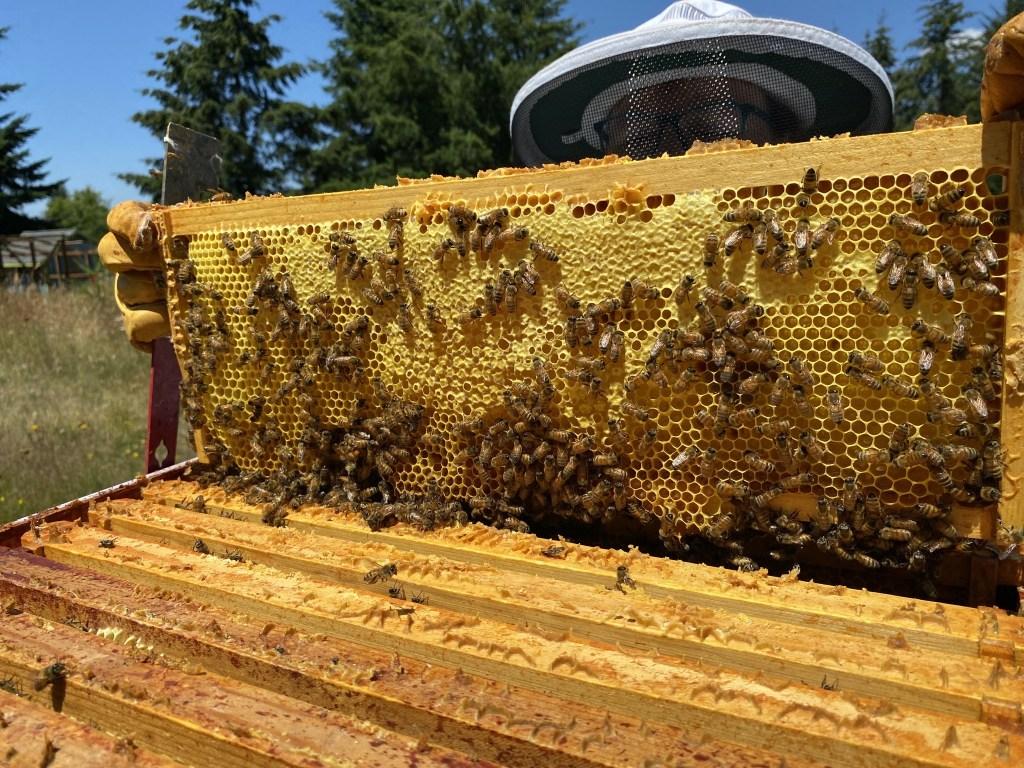 Purple honey frame