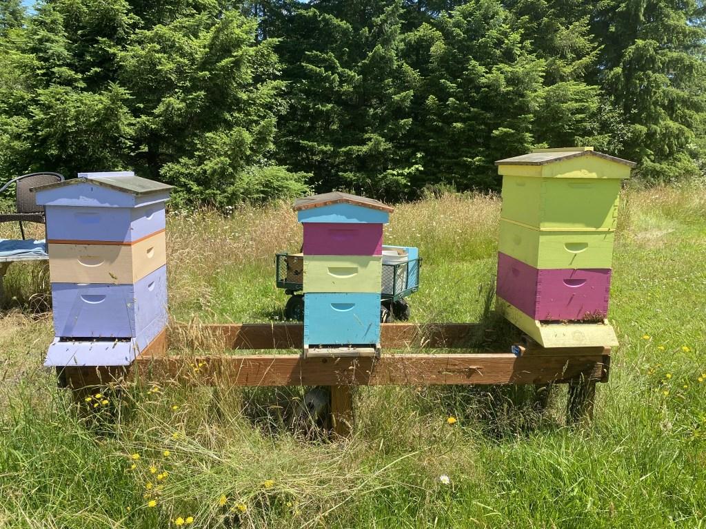 Right three hives