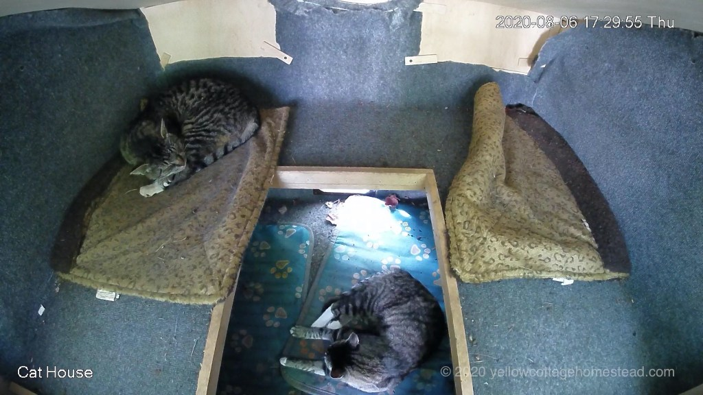 Two cats inside