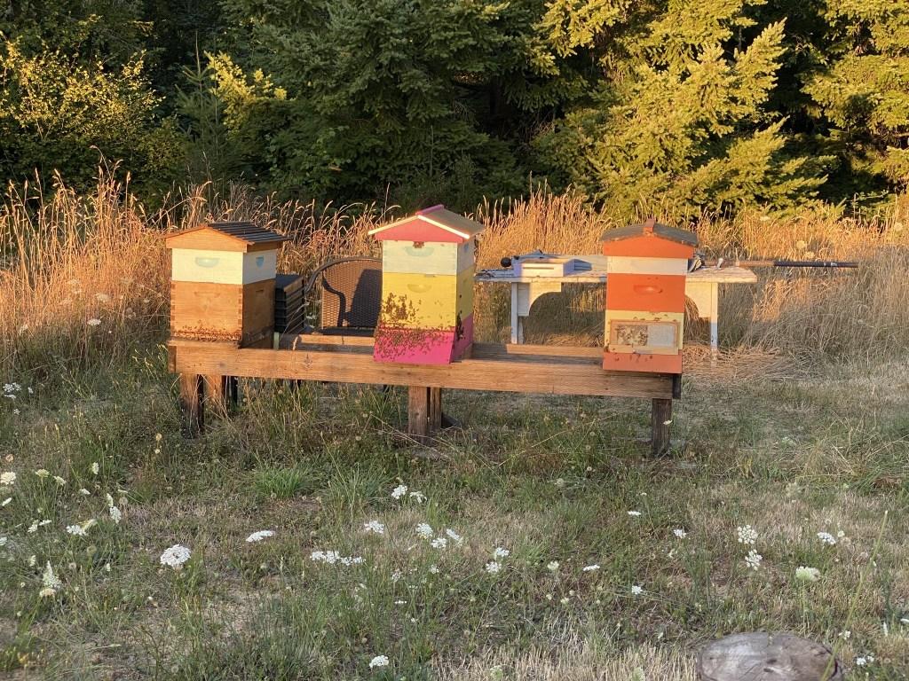 Hot bees