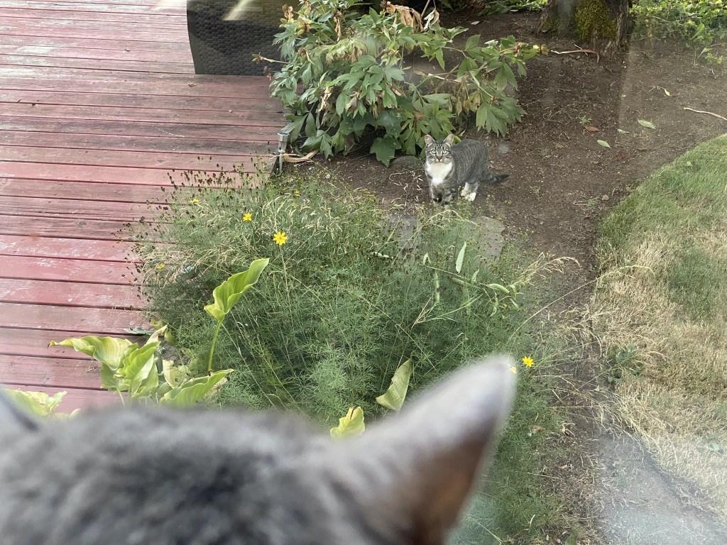 Paladin watches Bella