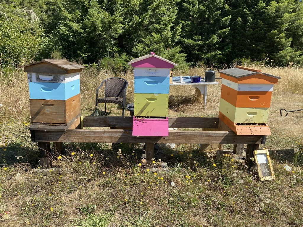 Cedar, Hot Pink, and Orange hives
