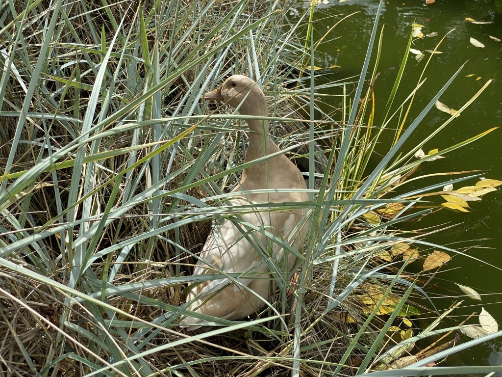 Betty in the grasses