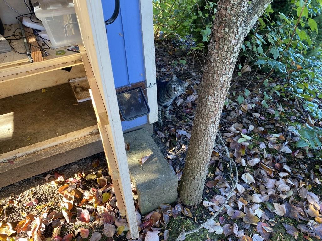 Cat peeking around the corner