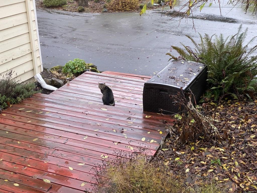 Spud on front steps