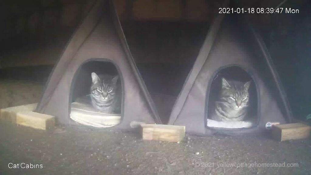 Cabin twins