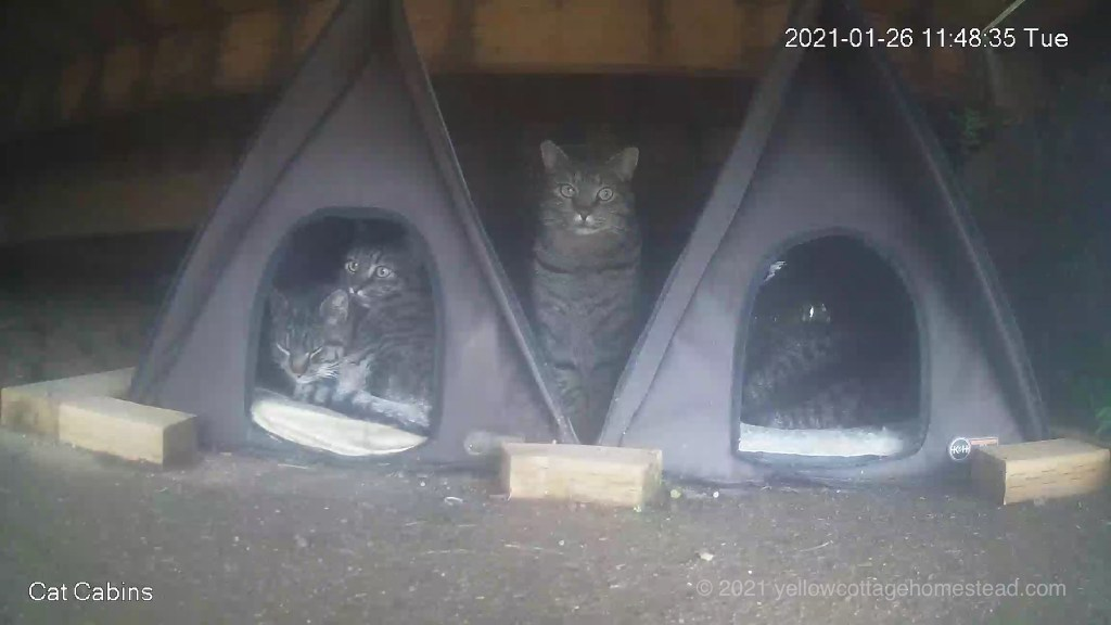 Four cats