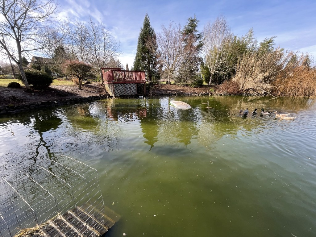 Wide angle of the pond
