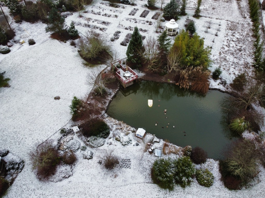 Pond, back lawn, flowerbeds