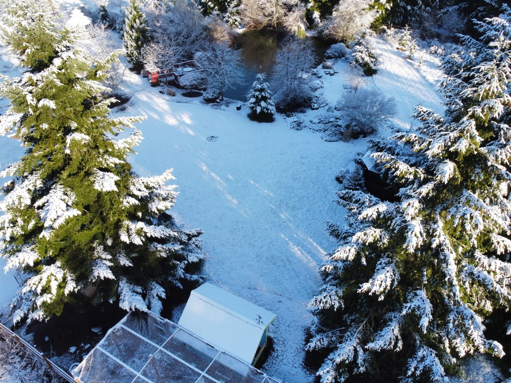 Snowy pond, trees, chicken coop