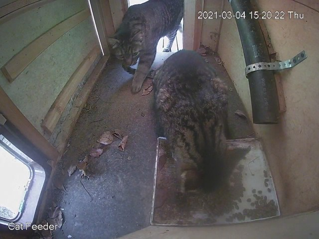 Two cats in the feeder