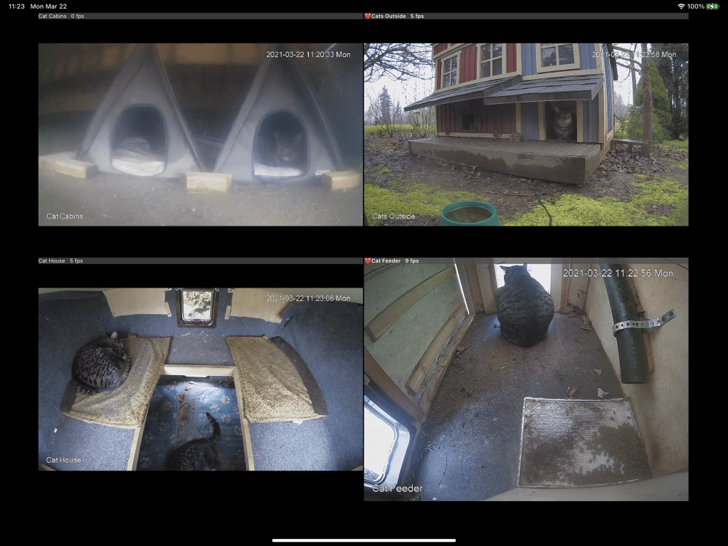 Cams screenshot of four cats