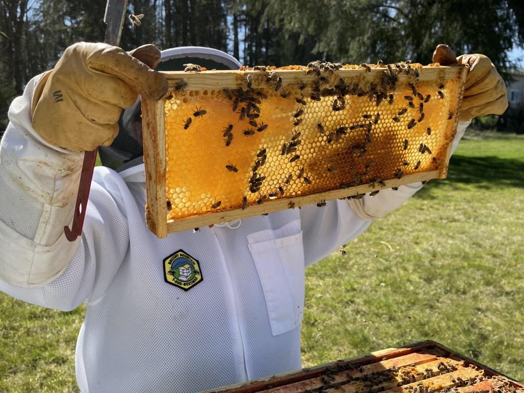 Yellow hive: honey