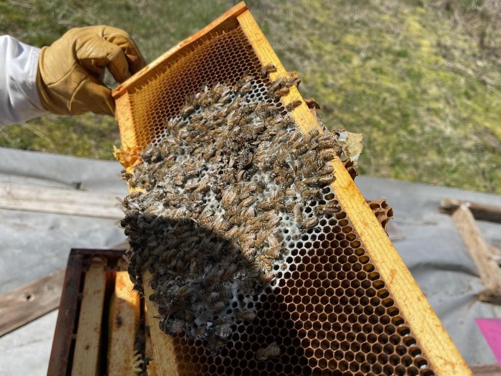 Orange hive: dead