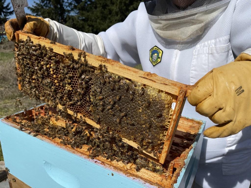 Cedar hive: old honey frame