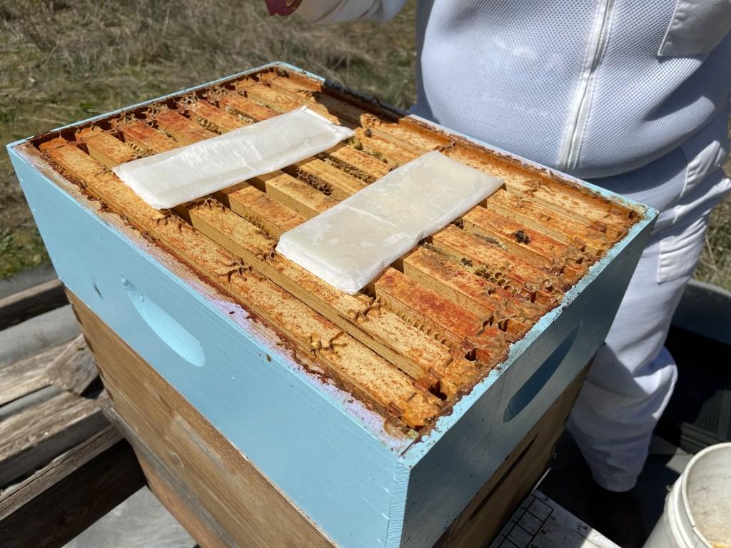 Cedar hive: mite treatments
